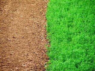divora erba
